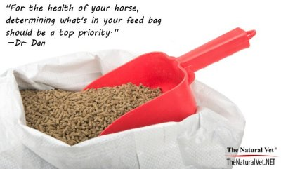 What To Feed Your Horse