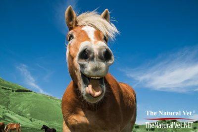 Healthy Soil, Healthy (and Happy!) Horses