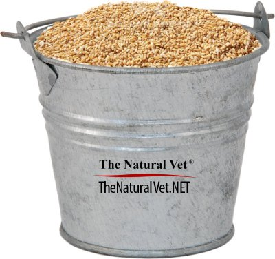 For The Health Of Horses Feed Oats
